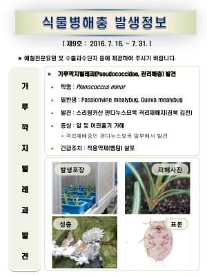 (2016년 9호) 식물병해충 발생정보