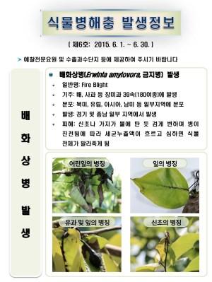 (2015년 6호) 식물병해충 발생정보