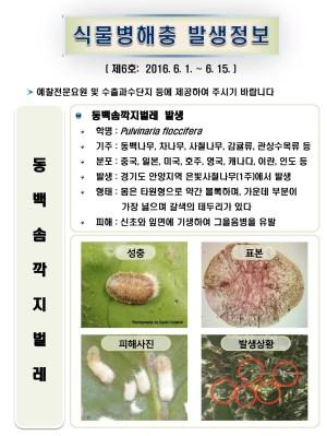 (2016년 6호) 식물병해충 발생정보